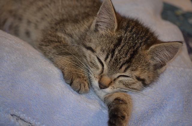 sleep-2551992_640.jpg